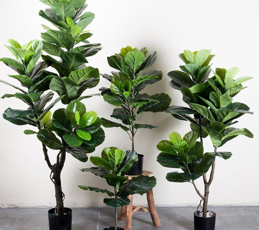 Chú ý cung cấp cho cây nhiều ánh sáng mặt trời