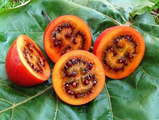 Sử dụng cà chua thân gỗ để trang trí làm bánh